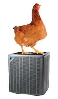 Photo of chicken atop heat pump