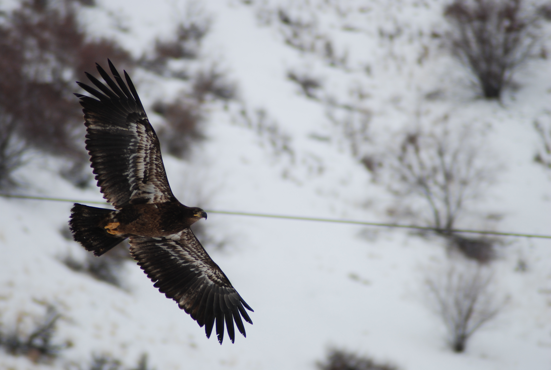 Birds and Powerlines