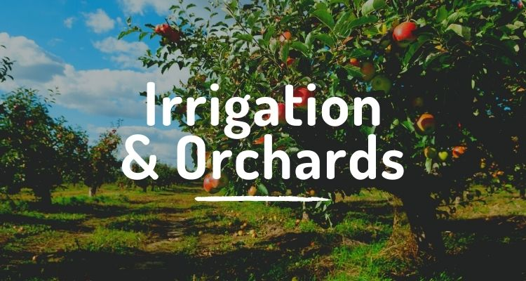 Irrigation and orchards
