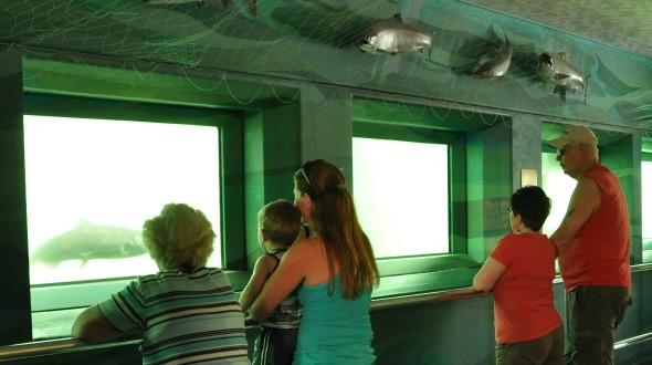 Visitors watch a summer Chinook swim up the fish ladder at Rocky Reach Dam.