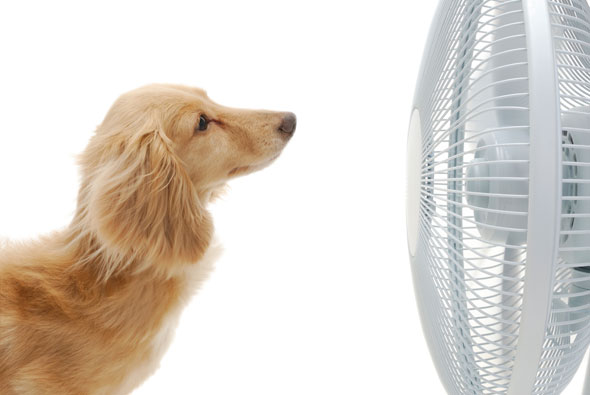 Photo of dog in front of fan