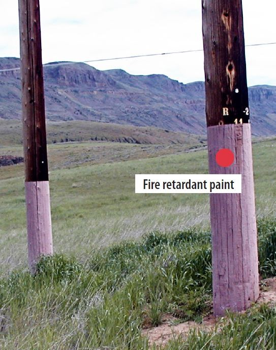 Photo of fire retardant paint on PUD wood poles