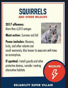 Squirrel facts