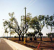 Image of incorrect tree v-pruning