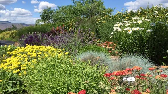 Image of a Xeriscape garden
