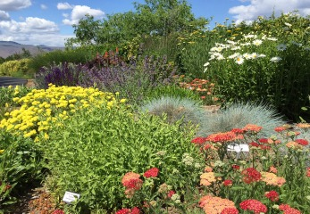 Photo of a xeriscape garden